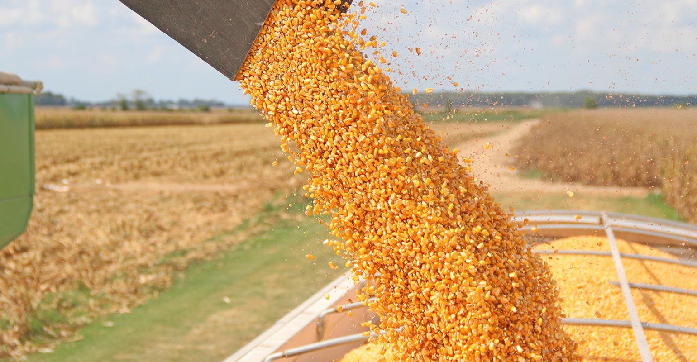 Оборудование для хранения зерна кукурузы
