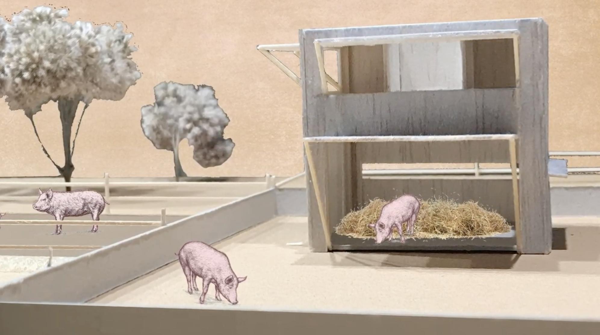 Архитектура для свиней – в Германии прошел конкурс на лучшие свиные виллы