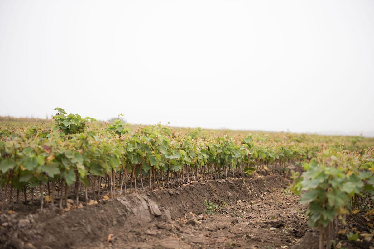 Виноградник в дубае купить стоимость квартиры в аргентине